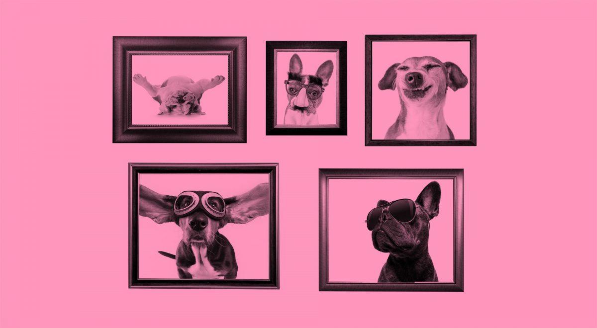 Inramade porträtt av roliga bilder på hundar