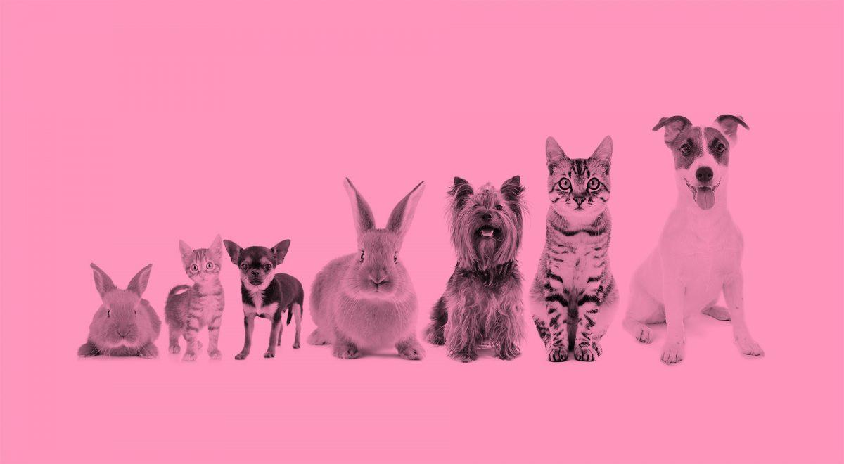 Sju olika djur på rad för att exemplifiera att alla kan vara olika