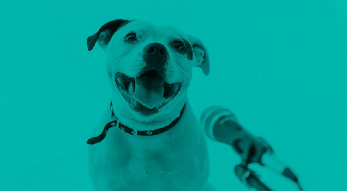 Hund som sitter framför en uppställd mikrofon