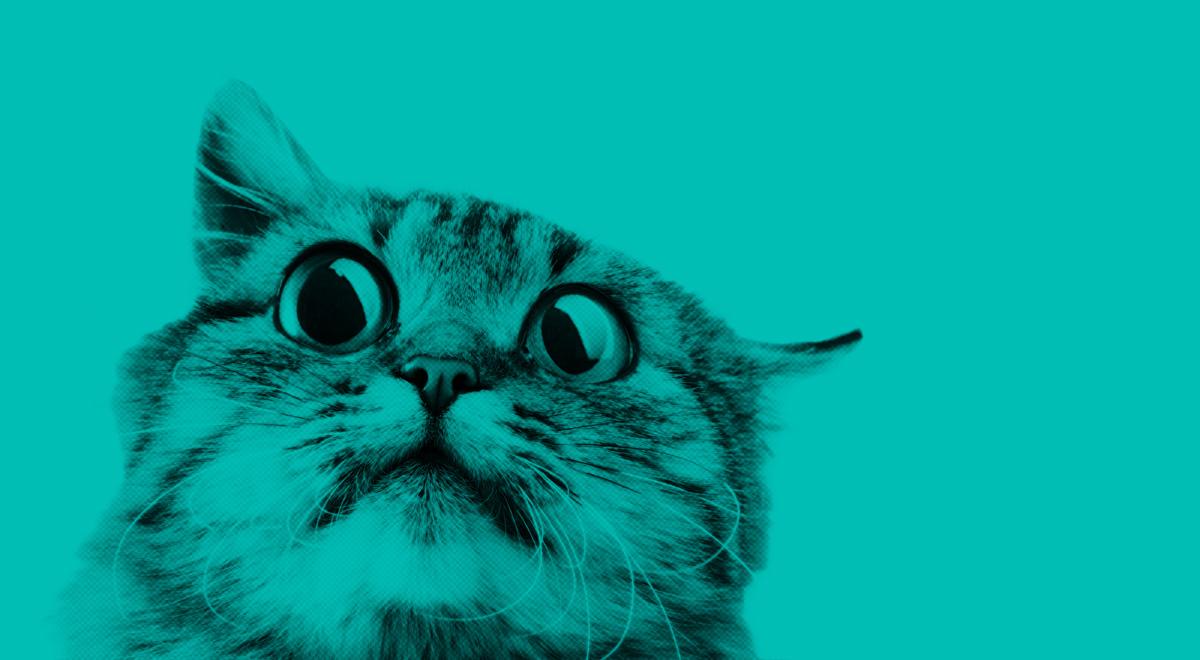 En rädd katt på turkos bakgrund