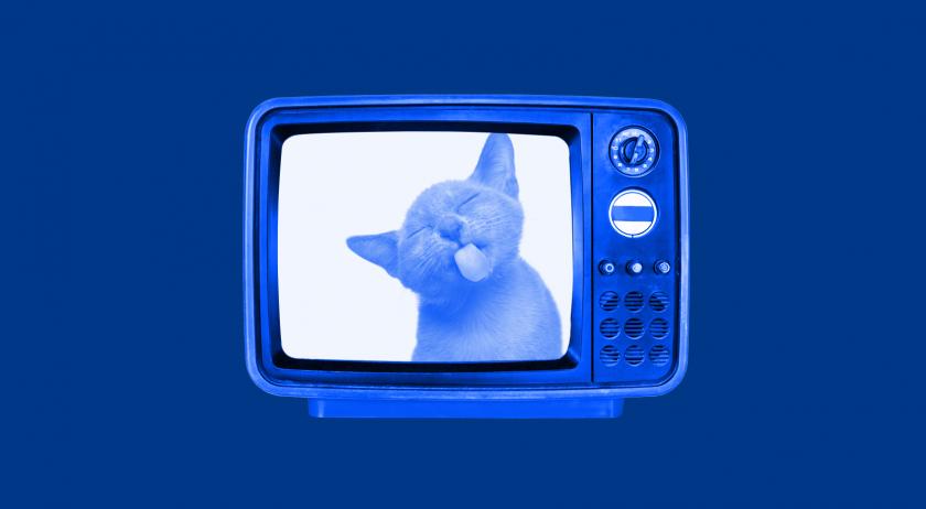 En söt katt som slickar på en tv-skärm